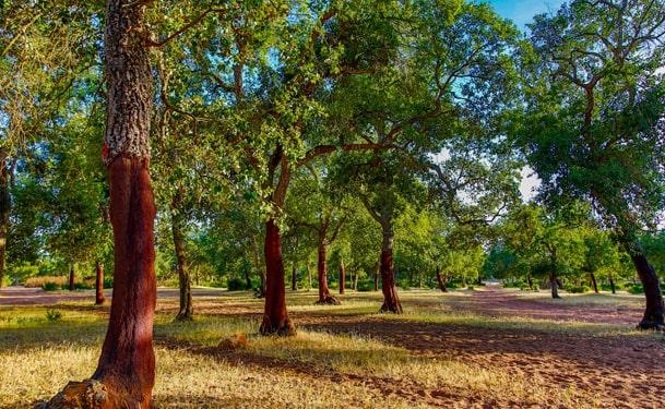 Forêt de la Maamora